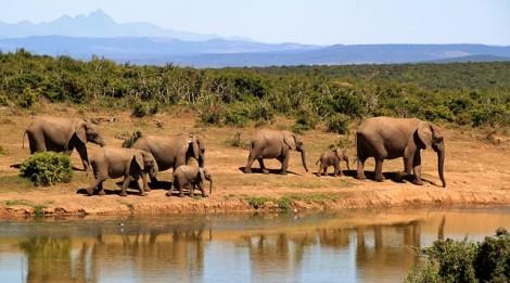 elephant-279505_640
